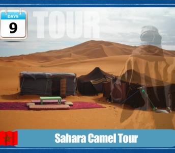 Tour de Camellos en Sahara